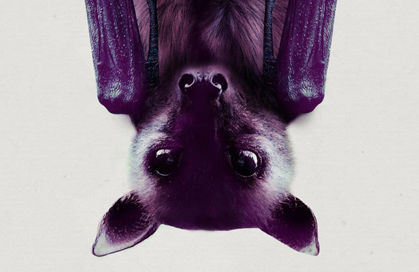 Diary: Batty show hangs out at Vault Festival