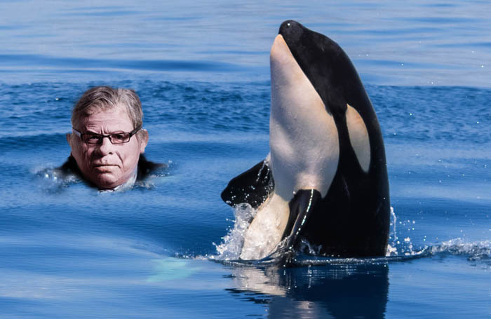 West End Producer will attempt to find a performer to star as the singing sea mammal in his Free Willy musical. Photo: Shutterstock